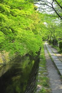 新緑の哲学の道の写真素材 [FYI04787043]