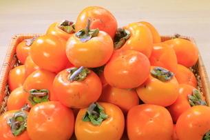 干し柿用の柿 の写真素材 [FYI04787046]