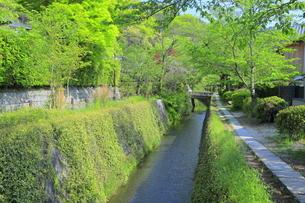 新緑の哲学の道の写真素材 [FYI04787048]