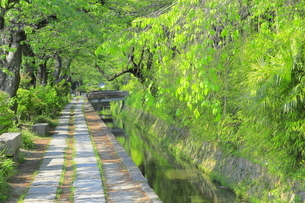 新緑の哲学の道の写真素材 [FYI04787051]