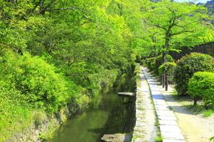 新緑の哲学の道の写真素材 [FYI04787069]