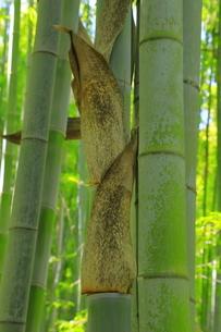 竹と竹の皮の写真素材 [FYI04787087]