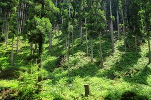 下草の多い森林の写真素材 [FYI04787092]