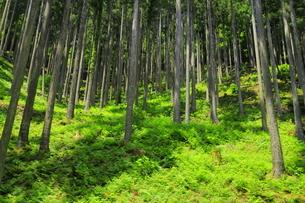 下草の多い森林の写真素材 [FYI04787093]