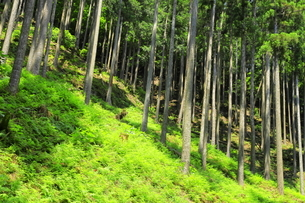 下草の多い森林の写真素材 [FYI04787094]
