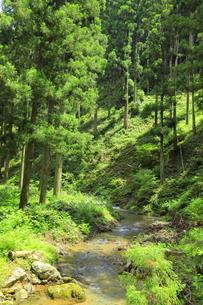 下草の多い森林の写真素材 [FYI04787095]