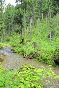 下草の多い森林の写真素材 [FYI04787096]