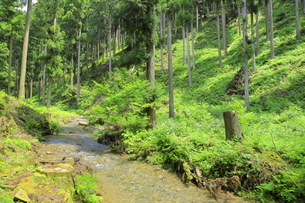 下草の多い森林の写真素材 [FYI04787097]