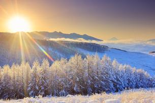 八ヶ岳連峰と富士山と霧氷のカラマツ林と雲海と朝日の写真素材 [FYI04787122]