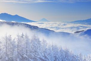 八ヶ岳連峰と富士山と雲海と霧氷のカラマツ林と朝霧の写真素材 [FYI04787133]