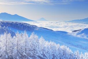 八ヶ岳連峰と富士山と朝の雲海と霧氷のカラマツ林の写真素材 [FYI04787134]