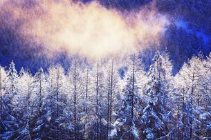 霧氷のカラマツ林と朝霧の写真素材 [FYI04787136]