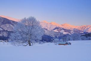 白馬連峰の朝のモルゲンロートと霧氷の木と小屋の写真素材 [FYI04787139]