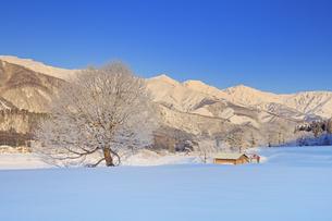 朝の白馬連峰と霧氷の木と小屋の写真素材 [FYI04787141]