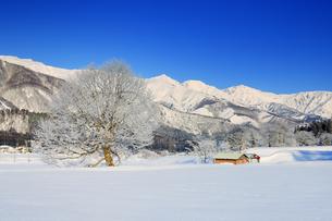白馬連峰と霧氷の木と小屋の写真素材 [FYI04787142]