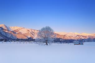 白馬連峰の朝のモルゲンロートと霧氷の木と小屋の写真素材 [FYI04787144]
