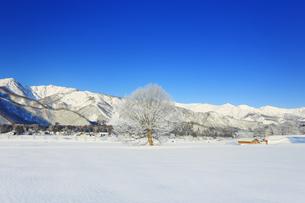白馬連峰と霧氷の木と小屋の写真素材 [FYI04787146]