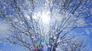 散る霧氷と木もれ日の写真素材 [FYI04787154]