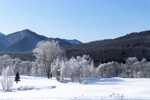 北海道冬の風景 富良野の樹氷の写真素材 [FYI04787344]