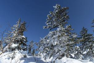 北海道 十勝岳連峰の冬の風景の写真素材 [FYI04787686]