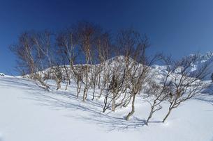 北海道 十勝岳連峰の冬の風景の写真素材 [FYI04787693]