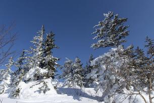 北海道 十勝岳連峰の冬の風景の写真素材 [FYI04787710]