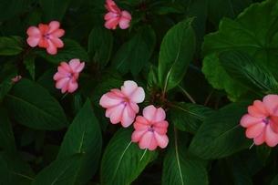 神戸どうぶつ王国の花の写真素材 [FYI04787780]
