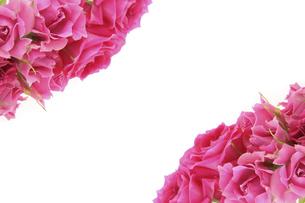 薔薇の花束の写真素材 [FYI04787951]