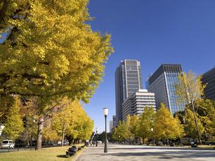 東京都 丸の内オフィスビル街とイチョウ並木 の写真素材 [FYI04788156]