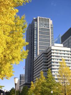 東京都 丸の内オフィスビル街とイチョウ並木 の写真素材 [FYI04788158]