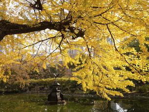 東京都 日比谷公園の黄葉の写真素材 [FYI04788240]