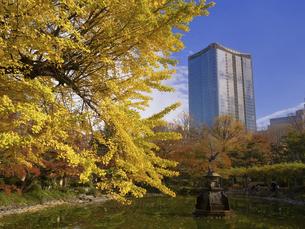 東京都 日比谷公園と東京ミッドタウン日比谷の写真素材 [FYI04788243]