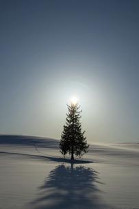 北海道 冬の美瑛町の風景の写真素材 [FYI04788479]