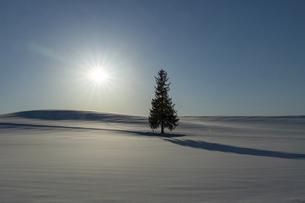 北海道 冬の美瑛町の風景の写真素材 [FYI04788480]