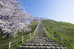 さきたま古墳の桜の写真素材 [FYI04788628]
