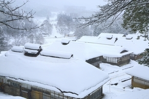 降雪の大内宿の写真素材 [FYI04788769]