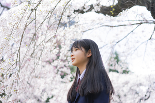 桜と女子学生の写真素材 [FYI04788821]