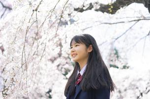 桜と女子学生の写真素材 [FYI04788822]