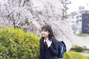 桜と女子学生の写真素材 [FYI04788827]