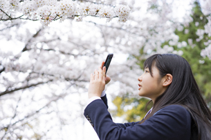 桜をスマートフォンで撮影する女子学生の写真素材 [FYI04788828]