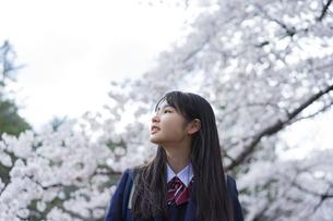 桜と女子学生の写真素材 [FYI04788841]