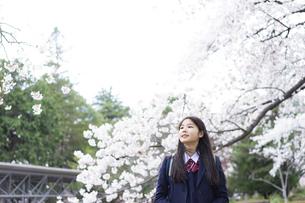 桜と女子学生の写真素材 [FYI04788843]