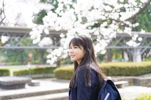桜と女子学生の写真素材 [FYI04788845]
