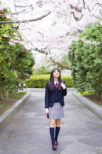 桜と女子学生の写真素材 [FYI04788857]