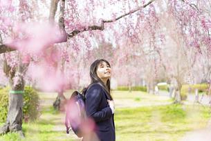 桜と女子学生の写真素材 [FYI04788868]
