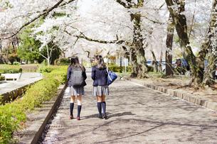 桜咲く道を歩く女子学生2人の後ろ姿の写真素材 [FYI04788876]