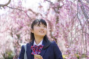 桜と女子学生の写真素材 [FYI04788883]