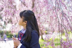 スマートフォンを持つ女子学生と桜の写真素材 [FYI04788887]