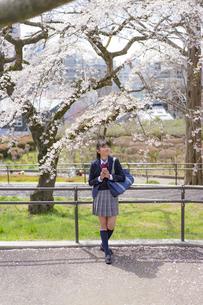スマートフォンを持つ女子学生と桜の写真素材 [FYI04788892]