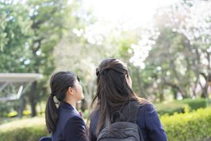 桜を見上げる女子学生2人の後ろ姿の写真素材 [FYI04788903]
